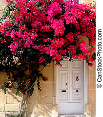Tree & Door - Beautiful pink flowers on tree next to door in...