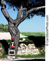 Crucifix Tree - This tree in Malta was formed by nature...