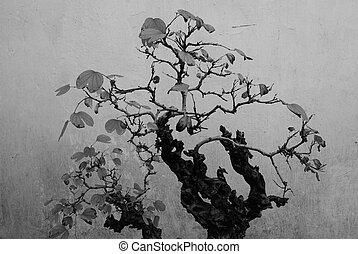 Bonsai Black & White - a Chinese bonsai