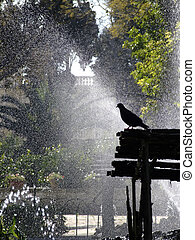 Its A Pigeons World - Fountain Series - Photos depicting...