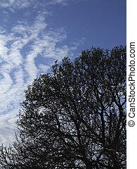 Carob Tree Silhouette - SIlhouette of old carob tree,...