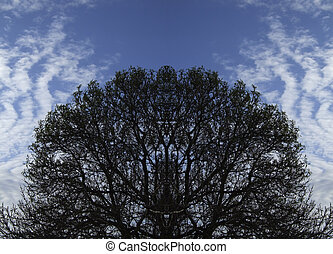Carob Tree Silhouette - SIlhouette of old carob tree,...