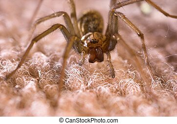 Facing Down a Spider - A large spider with all eigth eyes...