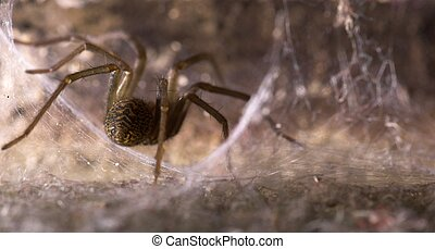 A Spider in its Den - A spider, sitting in its cobwebbed den
