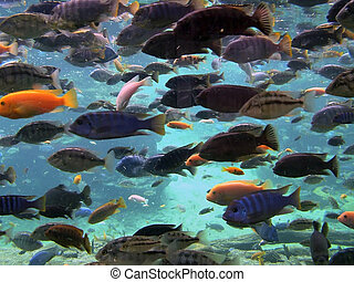 Fish - Tropical fish in vast numbers on ocean seabed