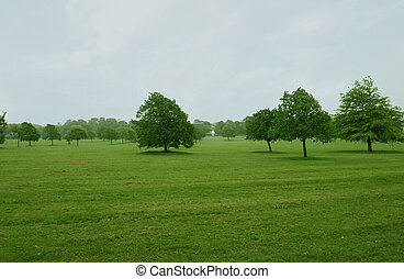 Trees on flat grass - London park in rainy morning