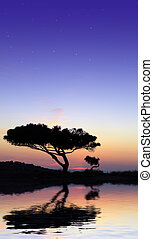 Under The Stars - Tree silhouette, against summery natural...
