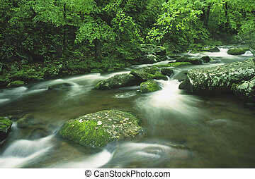 Cosby Creek in the early summer Great Mountains National...