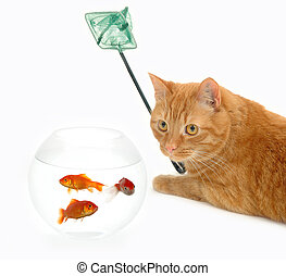 Cat fishing - Cat is holding a fishingnet, ready to catch...