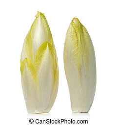 chicory - fresh endives over white background