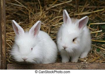 dois, bebê, coelhos