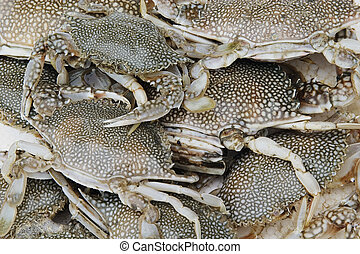 caranguejos, fresco, pegado
