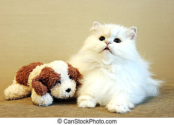 White cat and toy dog - Beautiful white Persian cat with a...