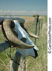 Bull head fence - skull on a fence