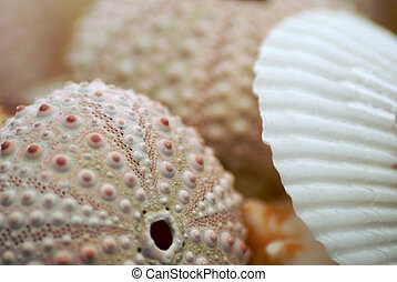 seashells up close - Collection of sea shells with shallow...