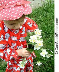 colheita, flores