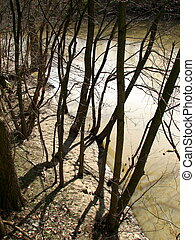 River Trees - Some trees by a river.