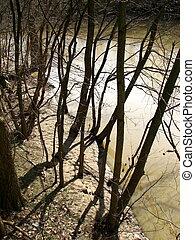 rivière, Arbres