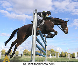 Rail Knocked Loose - A show jumper Knocking a rail loose....