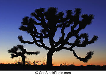 Joshua Tree at dusk - Joshua Tree (Yucca brevifolia) at...
