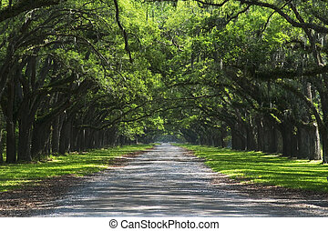 Oak cover road - Oak trees overhanging gravel road
