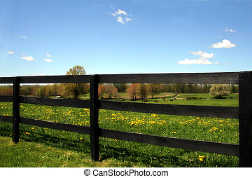 Horse Farm - Beautiful scenic horse farm landscape in rural...