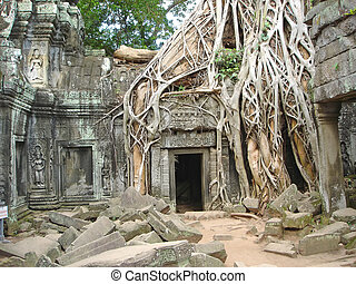 A tree over old ruin temple, Ta Prohm, Bayon, Angkor Tom,...