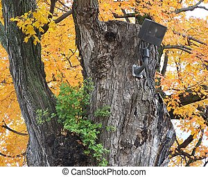 Speaker in a Tree - A speaker mounted in a tree, surrounded...