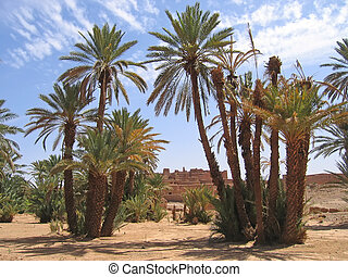 Desert oasis with palm trees, Zagora, Draa valley, Morocco -...