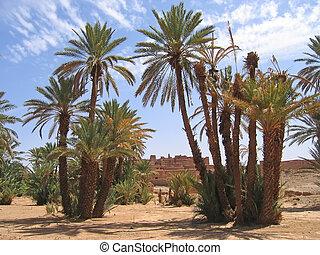 deserto, oásis, palma, árvores, Zagora, Draa,...
