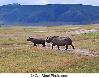 Rhinocero mother and her baby in the wild african savanna,...