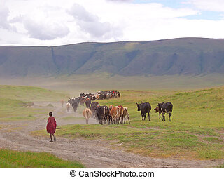 Young massai children bringing back his cows and beefs at...