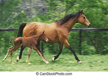 madre, caballo, tres, día, viejo, potro