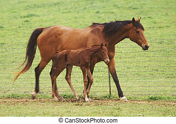 Mother horse and three day old colt