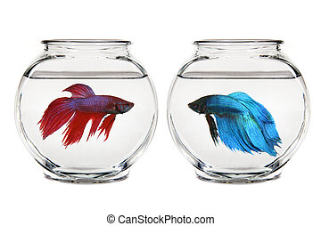 Empty Calm Bowl of Water - Calm Bowl of Water in a Gold Fish...