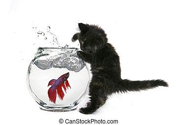 divertido, gato, Tratar, coger, pez