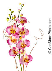 Orchids - Beautiful orchids
