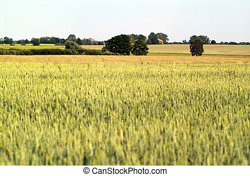 wide agricultural landscape with trees at the horizon
