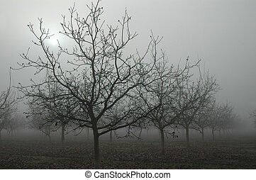 Walnut Grove in Fog