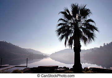 Palm Tree Lake Reflection - Sun Silhouetted Palm Tree and...