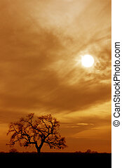 Lone Oak Tree - Lone, Bare, Winter Oak Tree Silhouetted...