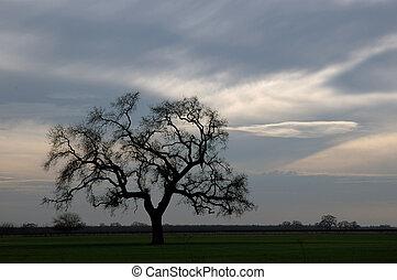 Lone Winter Oak Tree - Lone, Bare, Winter Oak Tree...