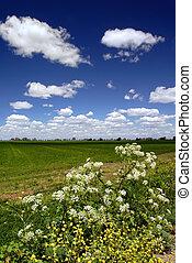 salvaje, flores, campos, cielo