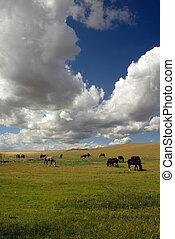 Horses Under Spring Sky - Horses in Vast Green Field under...