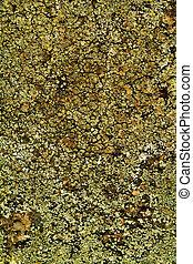 background texture lichen on cement wall