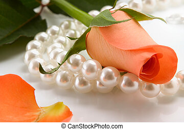 rose and pearl - white pearl necklace and rose over white...