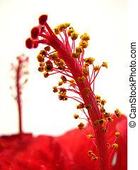 Red flower pistils - macro in focus