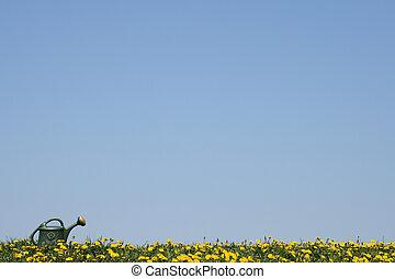 Regadera, florecimiento, primavera, campo
