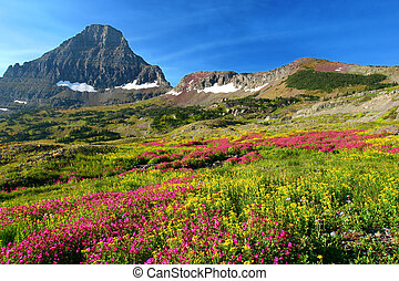 Alpine Meadows - Hidden Lake Trail, Logan Pass, Glacier...