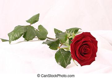 Rose on white silk - rose in full bloom on a white silk...